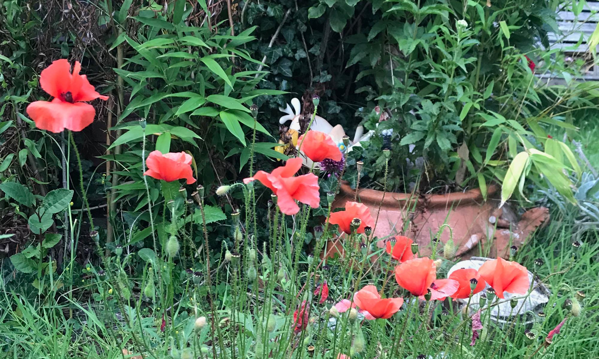 Tuinpark de Bongerd